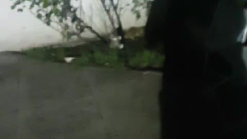 😻😻ASMR OMG Kittens Play fighting soo CUTE Must Watch for Cat/Kitten lovers😻😻