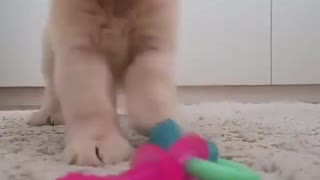 Tierno perrito con su juguete