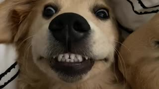 Pup using dental dog treats shows off her bright smile