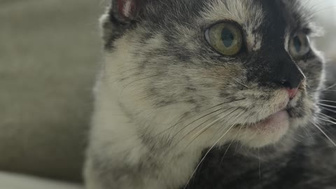 Close-Up View of a Cat Looking Around