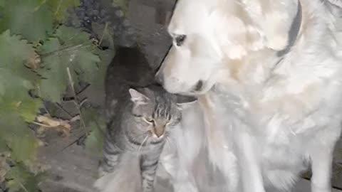Kat and dog.