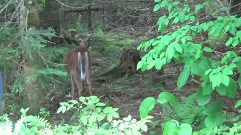 Mostly moose and deer