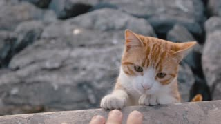 Cats Adorable