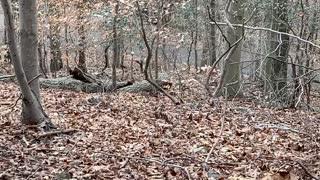 Close Encounter with a Fox