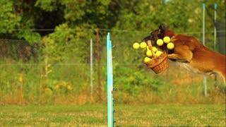 Dog training video 3