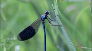 smart dragonfly
