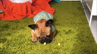 Funny Dog Life Video
