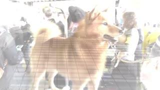 most dangerous dogs top