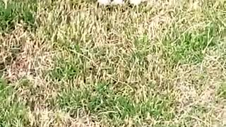 Kitten Loves Having Fun With Grass