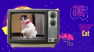 Retro tv, happy animals, animated ending