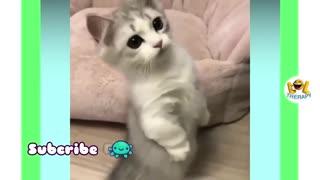 Cute cat secrets