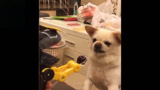 Cuteness overload pets