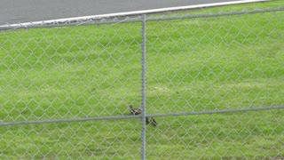 Lucky Ducks Race Across the Road