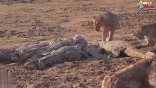Lion King Fear of Death deer, buffalo, elephant