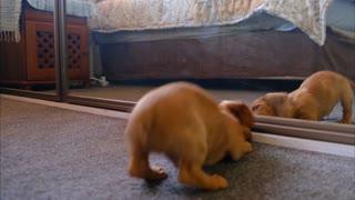 Mirror Prank Dog Hilarious Reaction