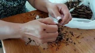 Hormigas culonas llegaron a una casa en Bucaramanga