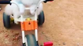 puppy biking