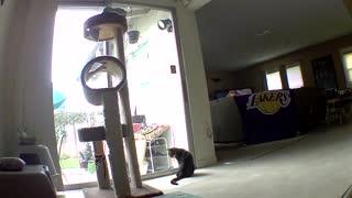 Cat battles lll