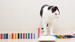 Funny cats with Domino :) Can not stop laughing