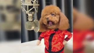 Babe dog singing Christmas music