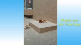 Funny Cats And Dogs Doing Their Things