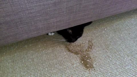 Sneaky Hiding Cat Will Only Come Out For Catnip.