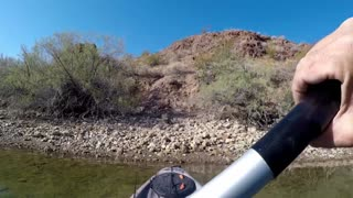 I caught an Owl while kayak Fishing!