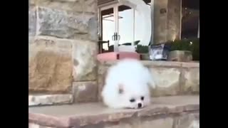 Great Dog Funny Video