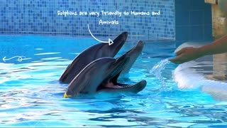 What you don't know about Dolphins