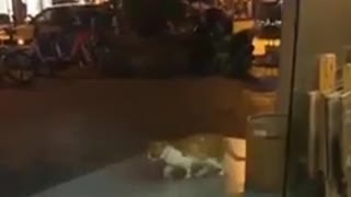 Cat Jackson