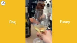 🤣Funny Dog Videos 2021🤣 🐶 Dog angry Funny