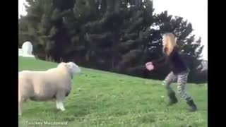 Girl playing with white sheep