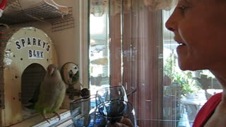 Sparky the Quaker Parrot Sings with Mom