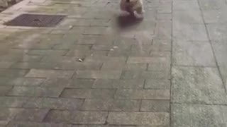 Cute puppy welcome Funny video Viral video Funny meme video