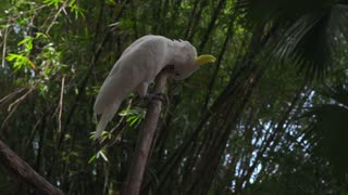 White Parrot Stretching