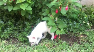 The most beautiful cat plays with flowers very very funny