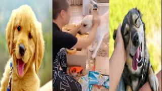Funny dog | Cute Dog | Smart Dog | dog video | awesome dog video