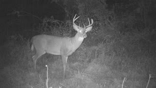 Nice PA 8 point back for more