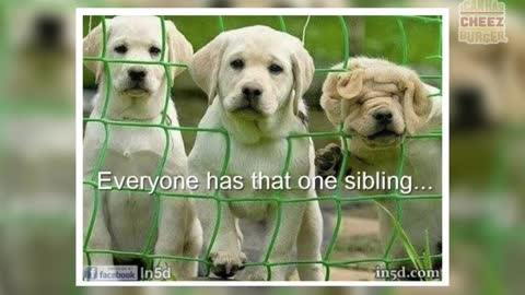 25 Times Animals Wished They Were An Only Child