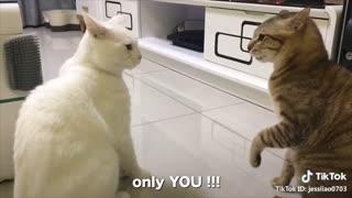 Talking Cats Speaking English