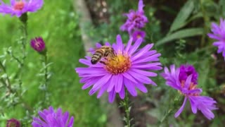 do you see before bee eating