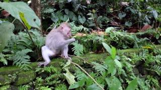 Smart monkey 🐵