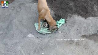 Dog Saves Newborn Puppies   Caring Mother