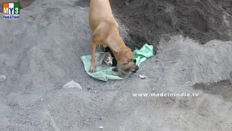 Dog Saves Newborn Puppies | Caring Mother