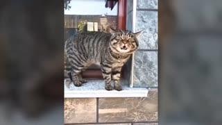 Cats speaking english! Amazing!!