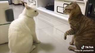 Cats speaking in english Wowww.....