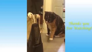 Great Funny Pets And Cute Animals