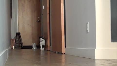 Kat walking Kitten.