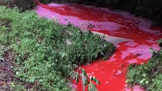 Scary Looking Chemical Spill in Georgia