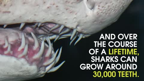 This Is Why Sharks Are Fascinating Creatures